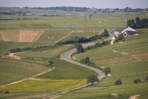 Sancerre vineyards (1)